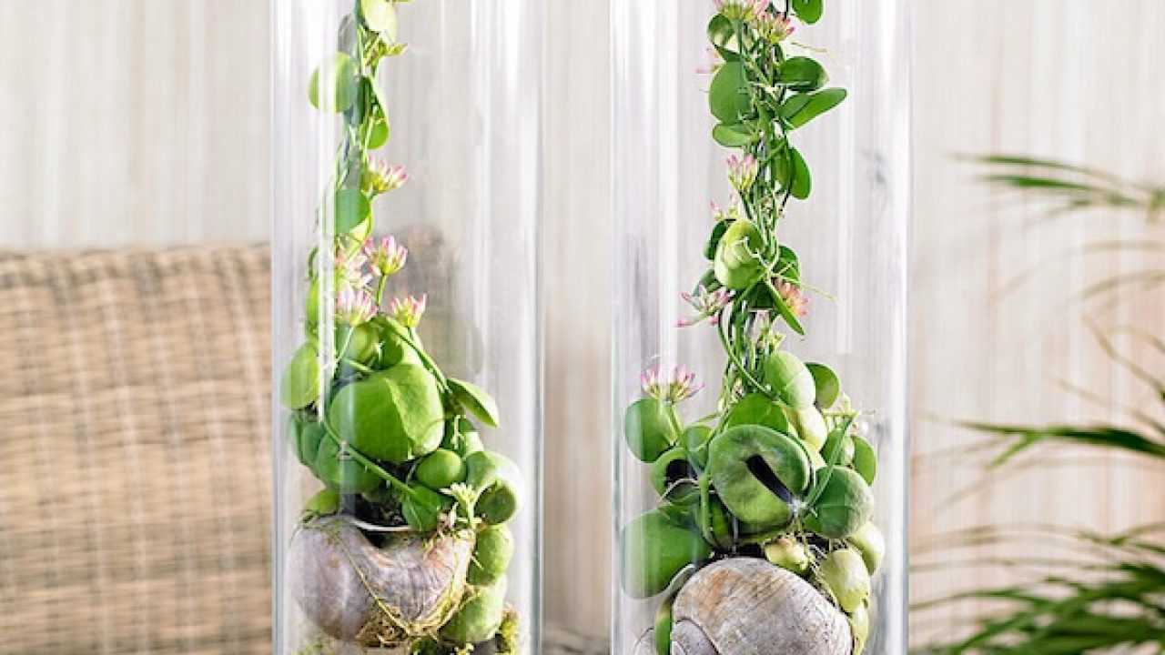 Piante Rampicanti Da Interno pianta da appartamento, quale scegliere - idee green