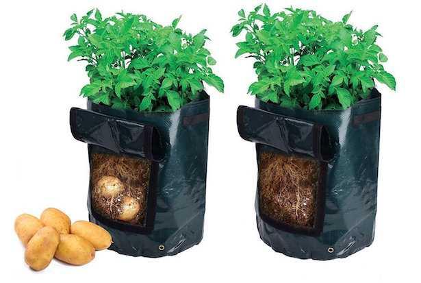 coltivare patate nel sacco