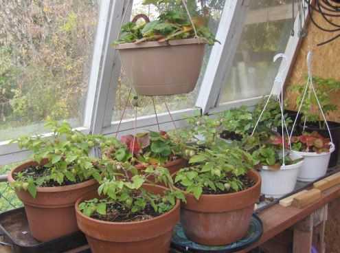 Come rinvasare le piante