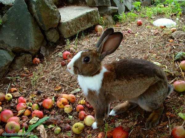 Come Iniziare Un Allevamento Di Conigli Idee Green
