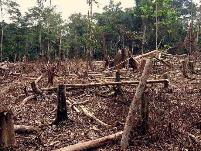 Amazzonia a rischio, cresce la deforestazione