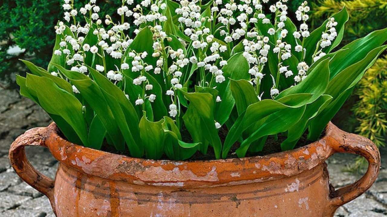 Fiori Da Balcone Ombra fiori per balcone all'ombra - idee green