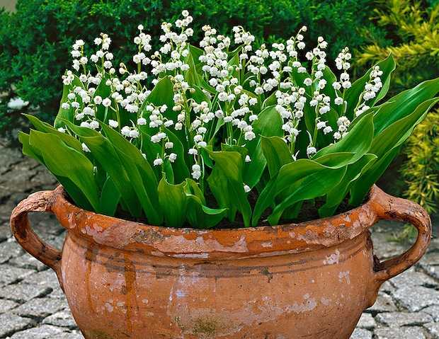 fiori per balcone all 39 ombra idee green