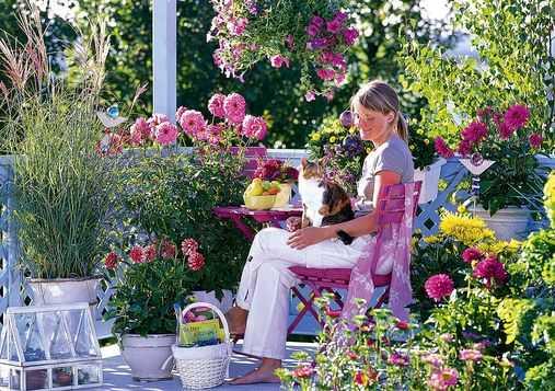 Piante da terrazzo quale scegliere idee green - Fiori da giardino primavera estate ...