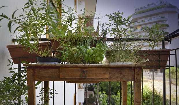 Orto in balcone il periodo di semina idee green for Orto sul terrazzo fai da te