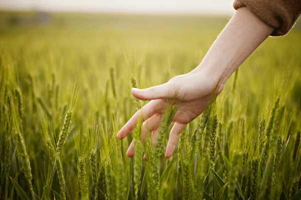 Agrodiversità e biodiversità sostenibile