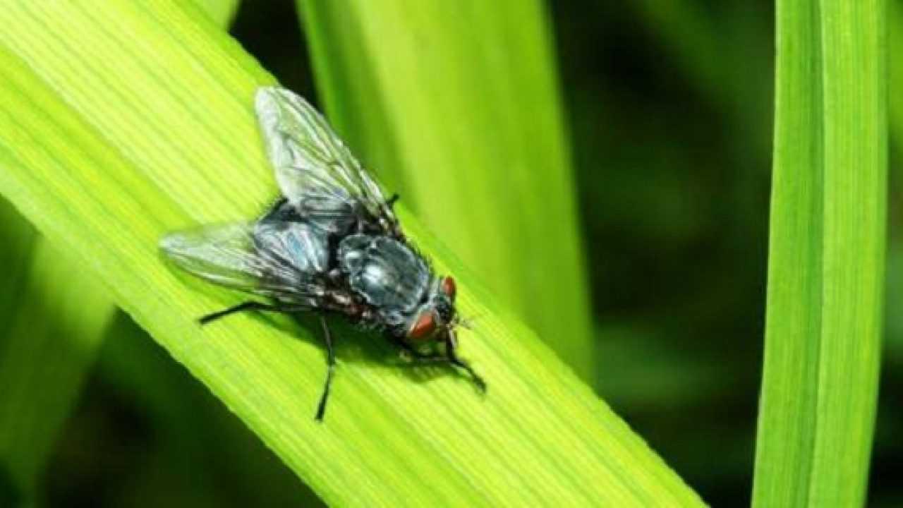 Troppe Mosche In Giardino come allontanare le mosche - idee green