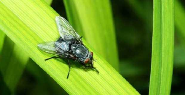 Come allontanare le mosche idee green - Come allontanare le formiche da casa ...