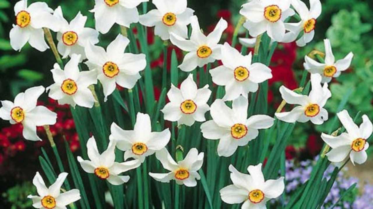Fiori Che Amano Il Sole quali fiori crescono bene in pieno sole? - idee green