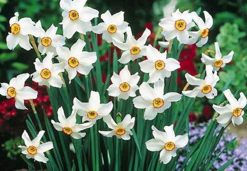 Quali fiori crescono bene in pieno sole idee green for Fiori primaverili da balcone