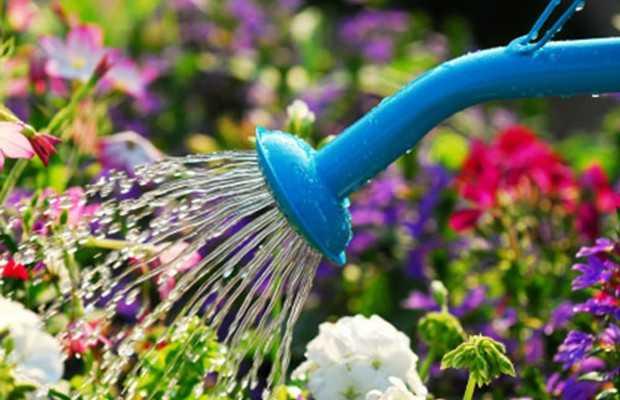 Innaffiatura di piante in vaso