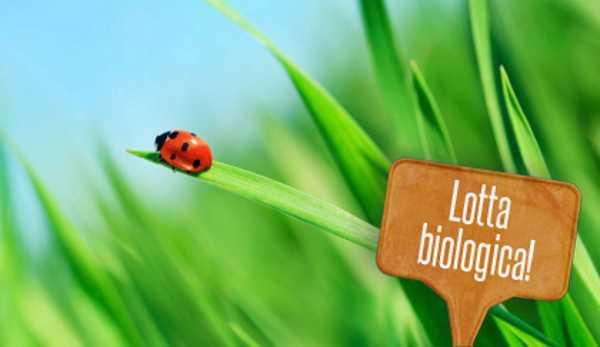 Lotta biologica in casa e in giardino