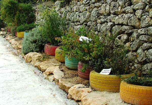 Piante aromatiche idee green - Piante aromatiche da giardino ...