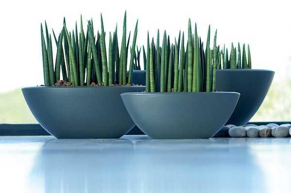 I vasi da appartamento pi trendy idee green for Vasi moderni da interno