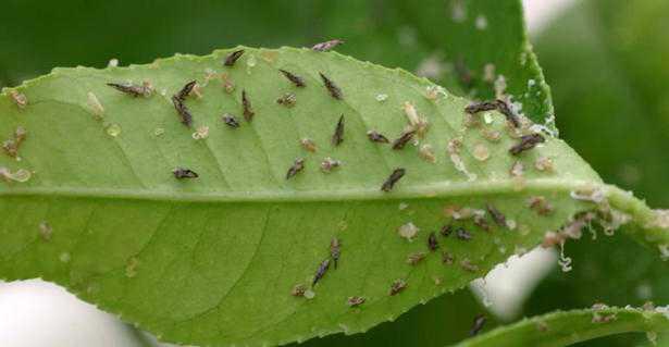 antiparassitari naturali per piante