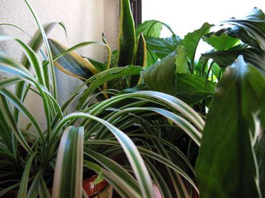 Cure d 39 agosto per piante in casa balcone e terrazzo for Piante appartamento design