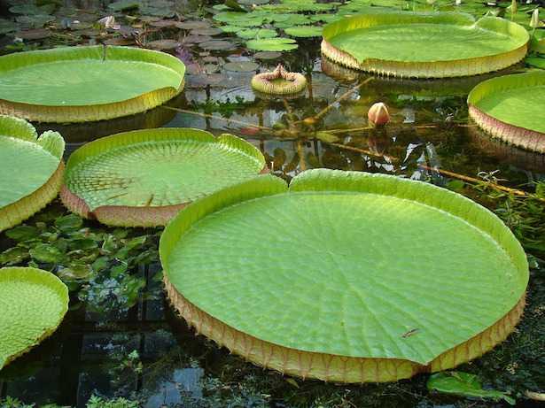 piante acquatiche per laghetto da giardino idee green