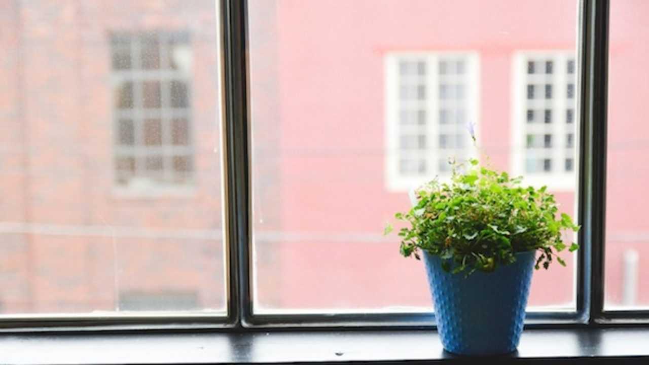Coltivare In Casa Piante Aromatiche coltivare piante aromatiche in vaso - idee green