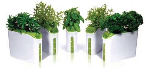 Coltivazione delle piante aromatiche in vaso idee green - Erbe aromatiche in casa ...