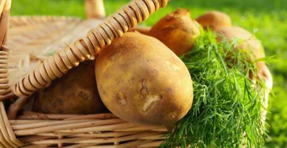 buccia patate