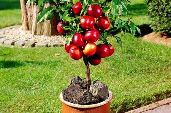 coltivare frutta in casa