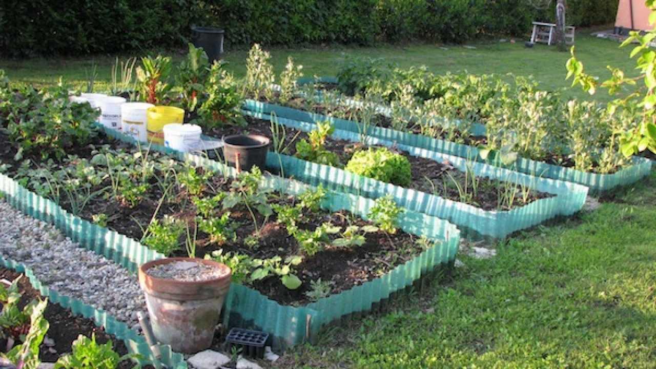 Piante Basse Da Aiuola come dividere l'orto, la disposizione delle aiuole - idee green
