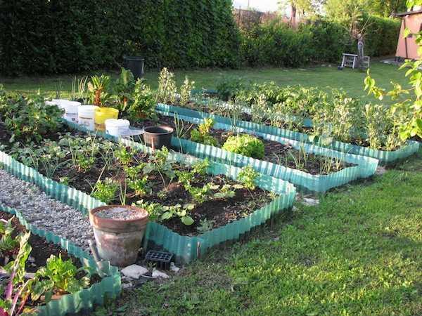 Come dividere l orto la disposizione delle aiuole idee green