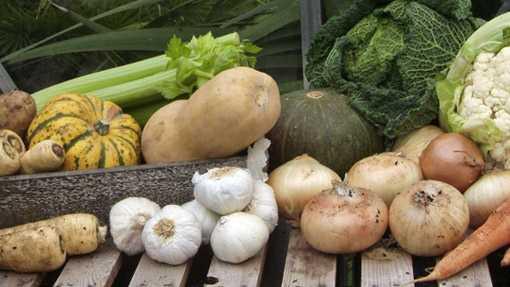 Cosa coltivare a settembre idee green for Cosa piantare nell orto adesso