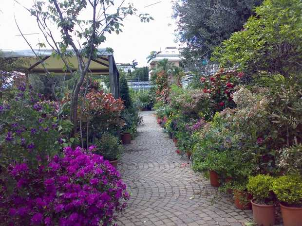 Piante da esterno quali scegliere idee green - Piante sempreverdi per terrazzi ...