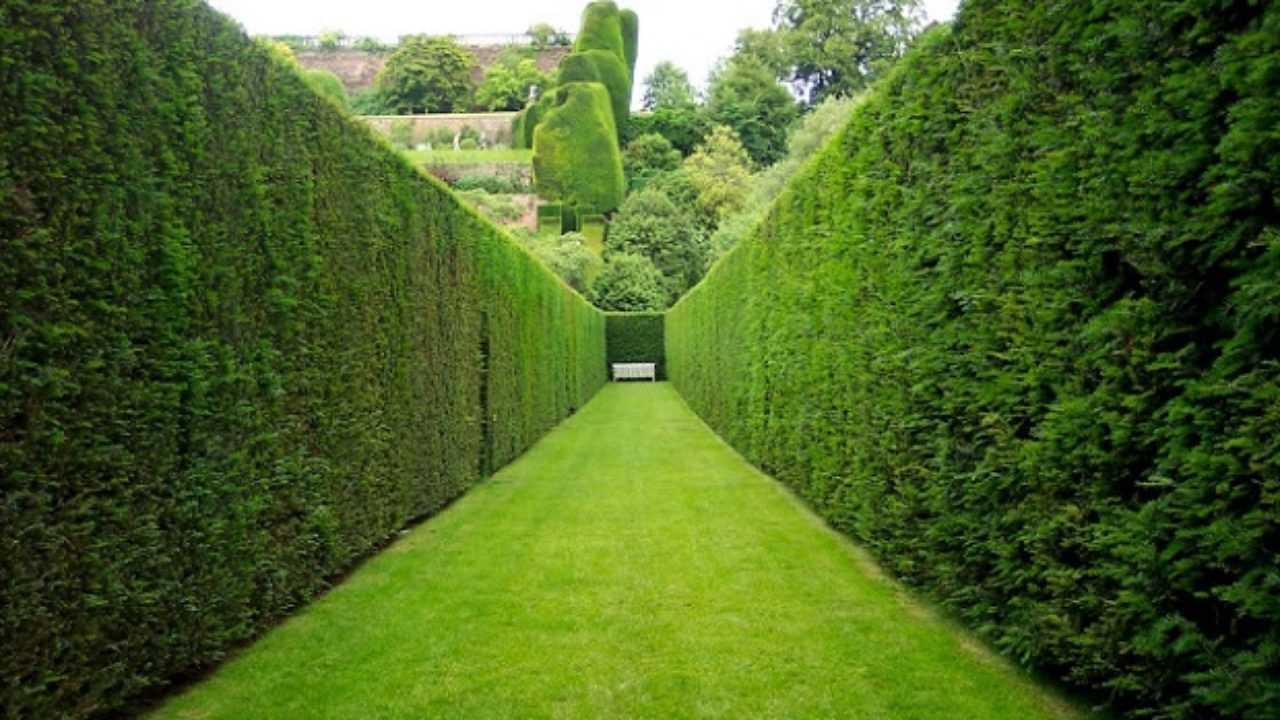 Piante Da Siepi Immagini piante da siepe, quale scegliere - idee green