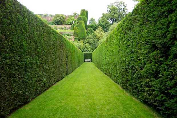 Piante da siepe quale scegliere idee green for Piante per siepi sempreverdi