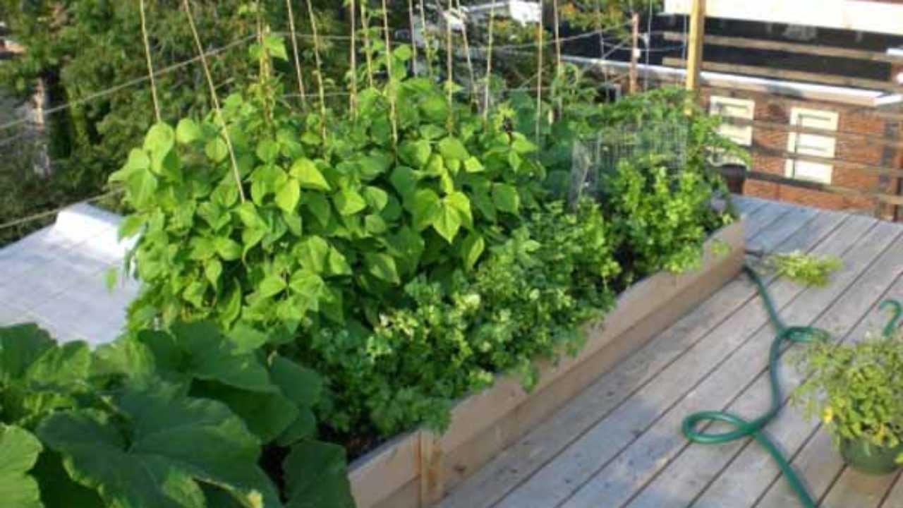 Divisori In Plastica Per Terrazzi come coltivare le piante in terrazzo - idee green