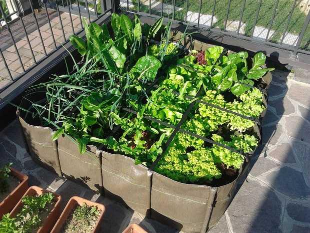 Come coltivare l\'orto sul terrazzo - Idee Green