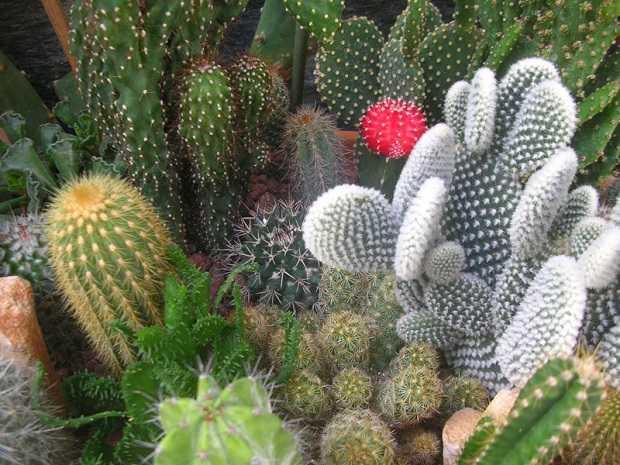 Come rinvasare le piante grasse idee green for Foto piante grasse particolari