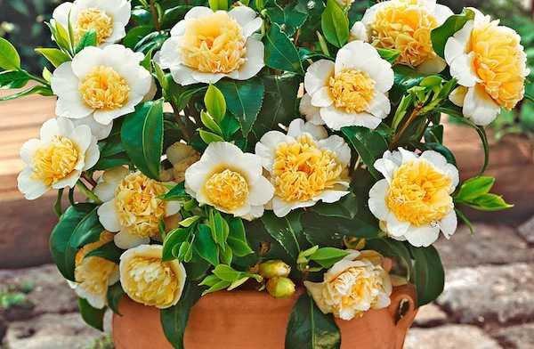 Piante che resistono al freddo idee green for Cespugli fioriti perenni da giardino