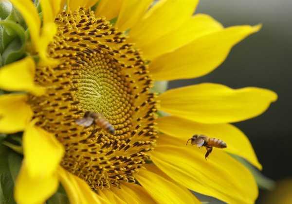 neonicotinoidi-api