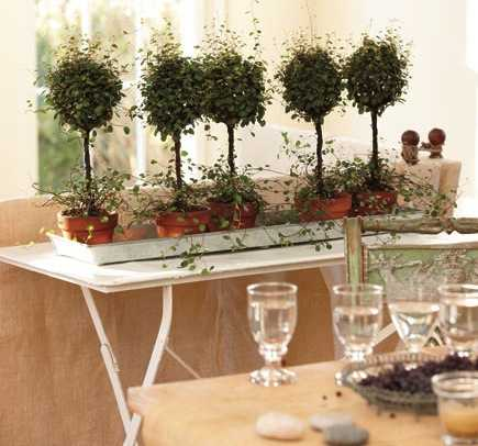 come arredare casa con le piante idee green