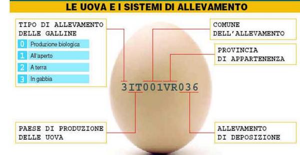 classificazione uova