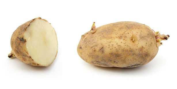 coltivazione patata in vaso