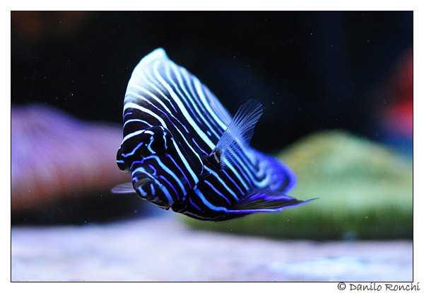 occorrente acquario marino