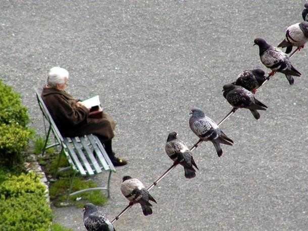 Come allontanare i piccioni idee green - Allontanare i gatti dal giardino ...