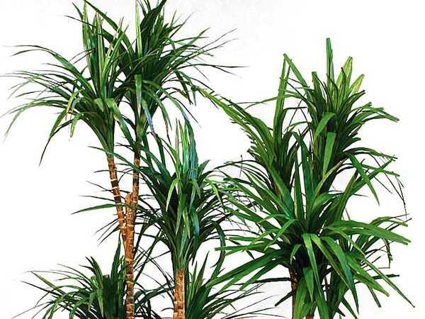Quali sono le piante che purificano l'aria? - Idee Green