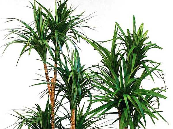 piante per pulire aria