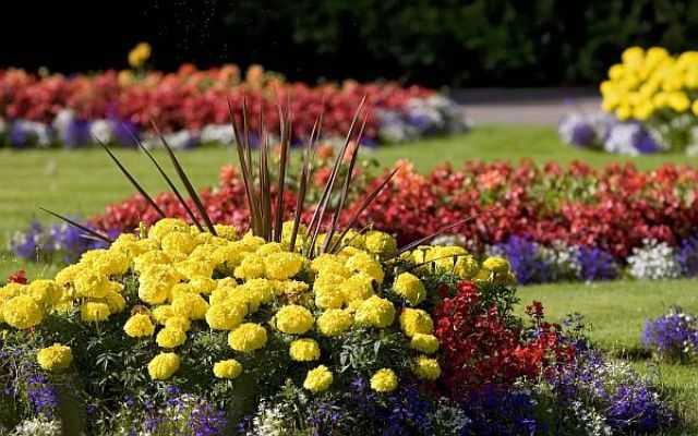 Quali fiori scegliere per l 39 aiuola idee green for Fiori da giardino