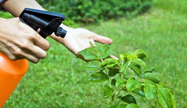 Piante antiparassitari fai da te idee green for Piante da comprare