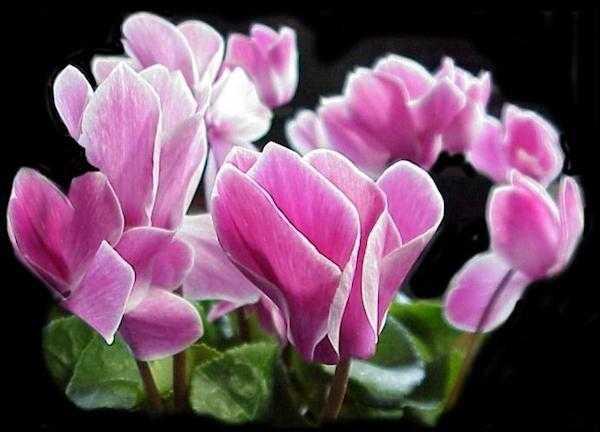 I fiori per l\'arredo del balcone in inverno - Idee Green