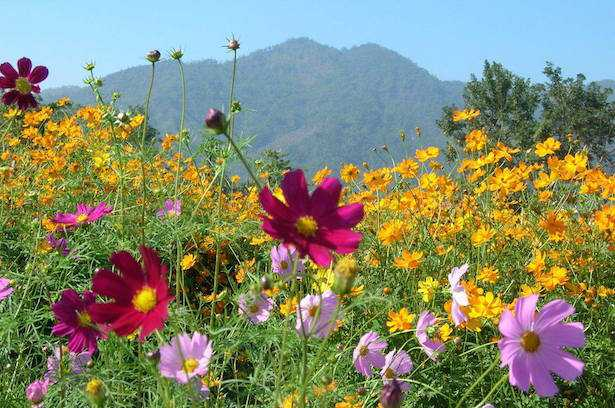 coltivare prato fiorito