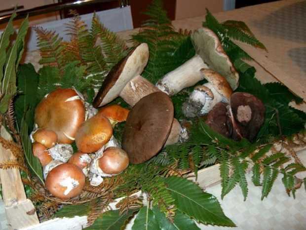 come riconoscere funghi