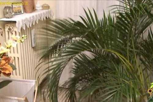 Le piante da appartamento in inverno - Idee Green