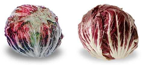 radicchio variegato e radicchio rosso
